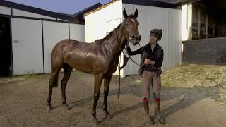 Brian Ellison is now one of the leading dual-purpose racehorse trainers in the UK.