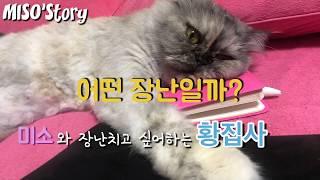 페르시안친칠라 고양이 미소의 일상 이야기