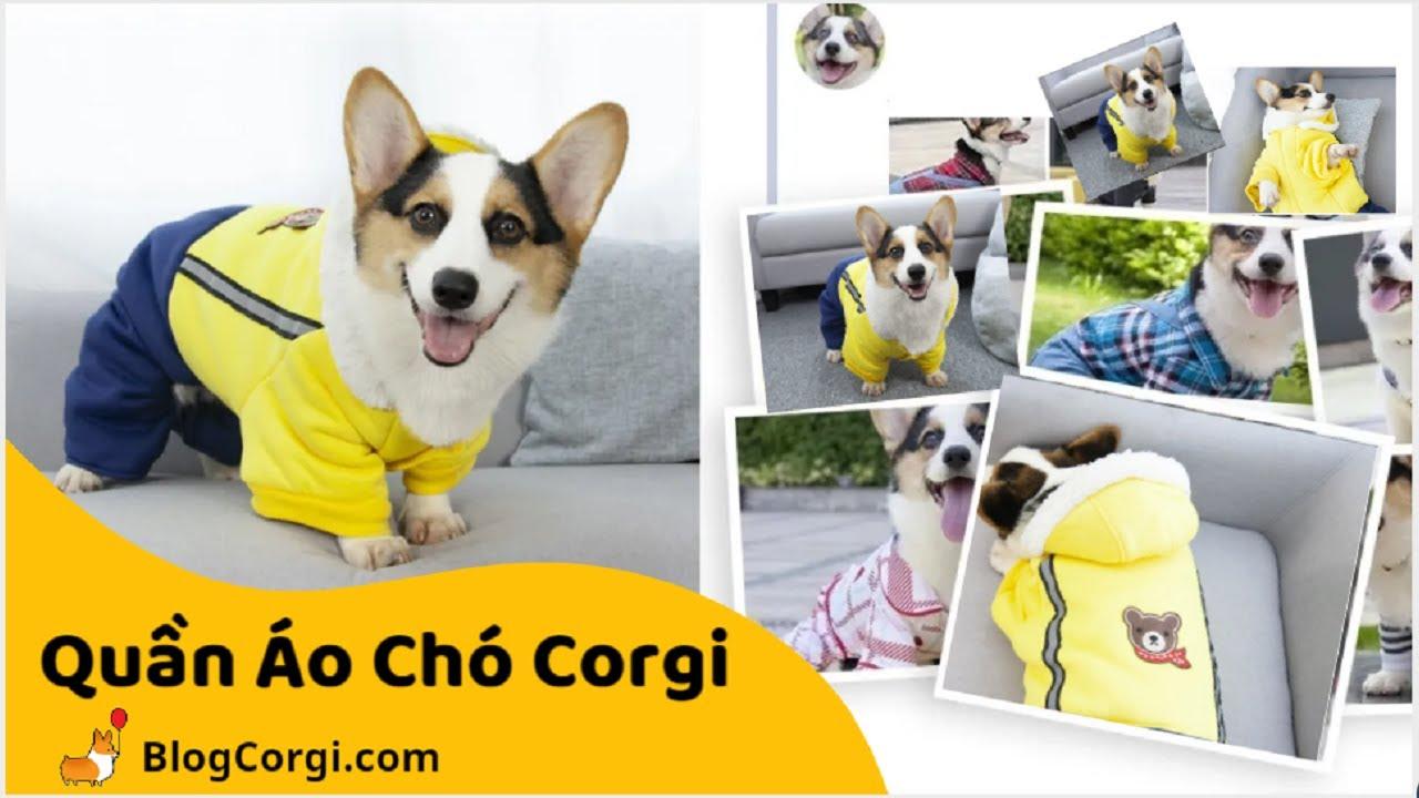 #10 💖Quần Áo Cho Chó Corgi, Poodle🐹 Siêu Đẹp [BlogCorgi.com]   Thông Tin về áo cho chó