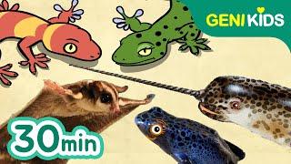 신비한 동물사전   도마뱀붙이, 독화살개구리, 일각돌고래, 슈가글라이더   지니키즈★인기 영상모음