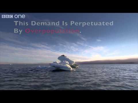 Center For Biological Diversity Polar Bear