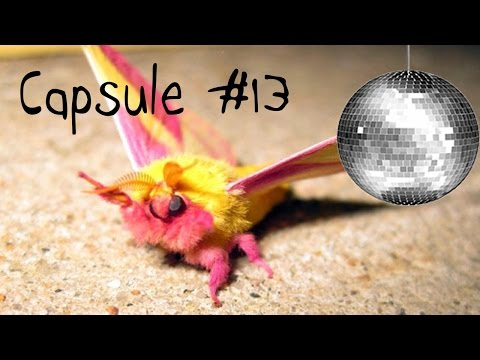 Capsule #13 - Saturniidae Night Fever!