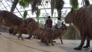 神戸どうぶつ王国で色々な動物に癒された。