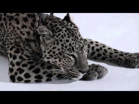 GUBANOVA - My Heart`s Only Man (video Created By Eleonora Orlova)