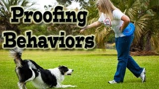 Proofing Behaviors: Dog Training