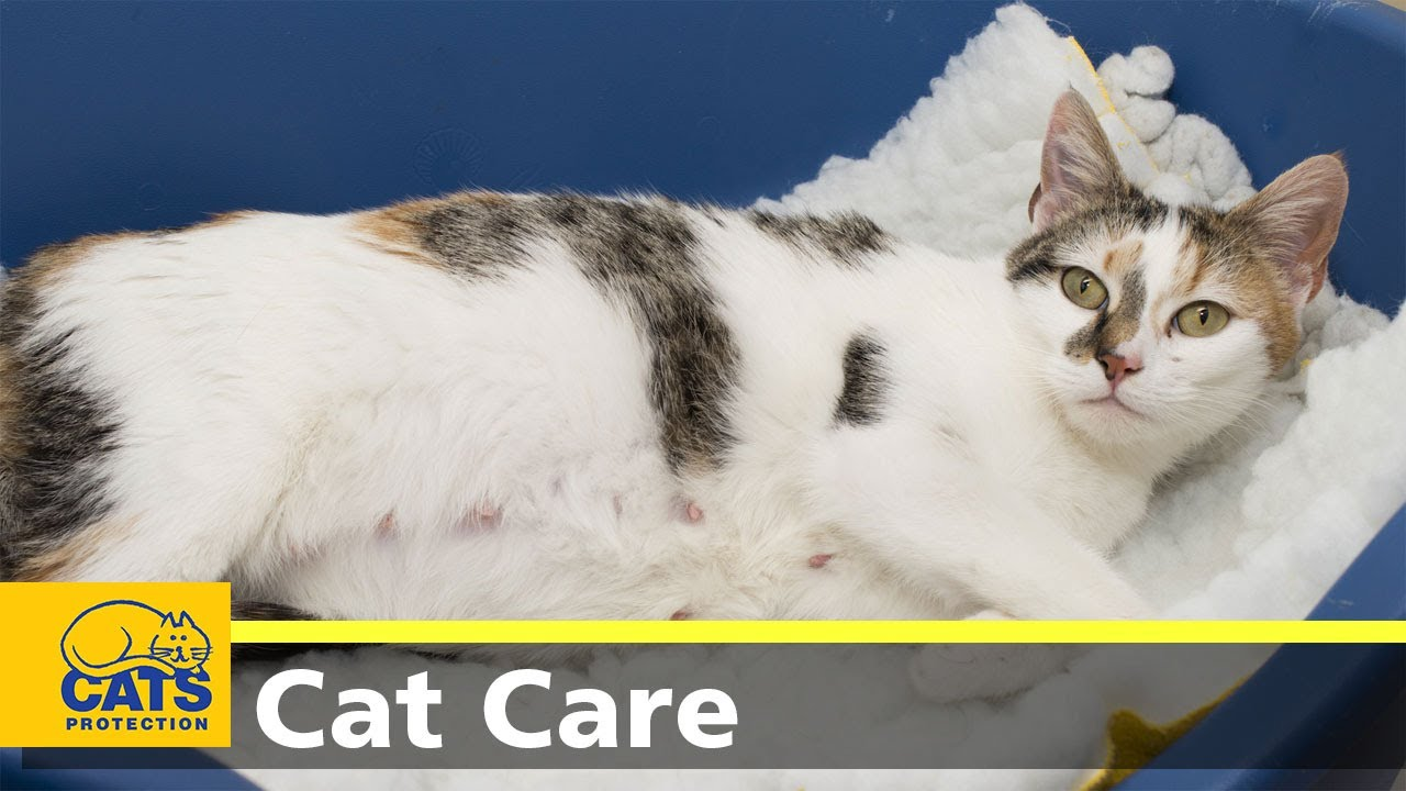 Caring For Pregnant Cats Youtube
