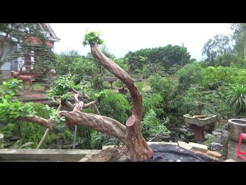Vườn cây Hoa quả sơn  LƯU XÁ Thái nguyên