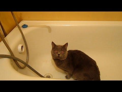 Ужасы в ванной комнате с плиткой приклеенной на окрашенные стены. Как отваливается плитка со стен