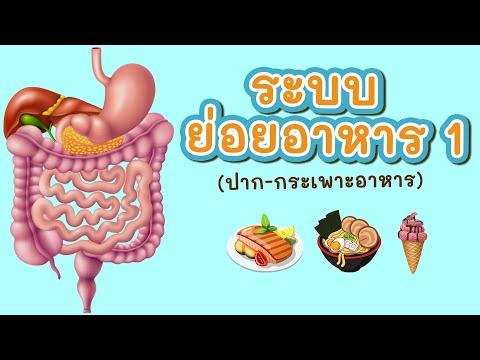 ระบบย่อยอาหาร 1/2 (ปาก-กระเพาะอาหาร)
