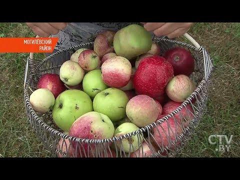 Как продать яблоки из своего сада