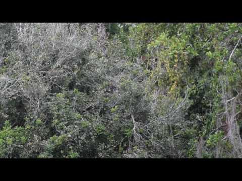 Wildlife in Tikal, Guatemala