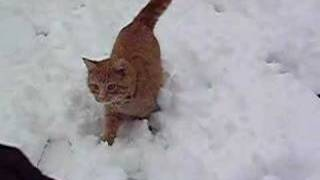 snow and cats a great combination
