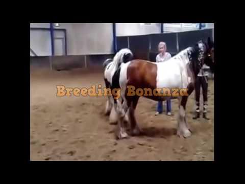 Breeding and Mating for educational purposes 3 thumbnail