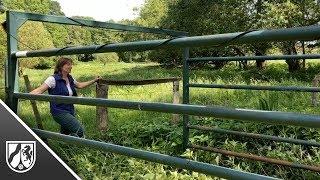 Wasserbüffel auf A3 bei Leverkusen: Besitzerin ist verärgert über Polizei