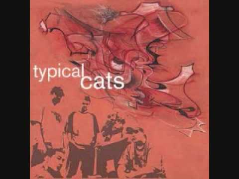 Typical Cats - Reinventing The Wheel