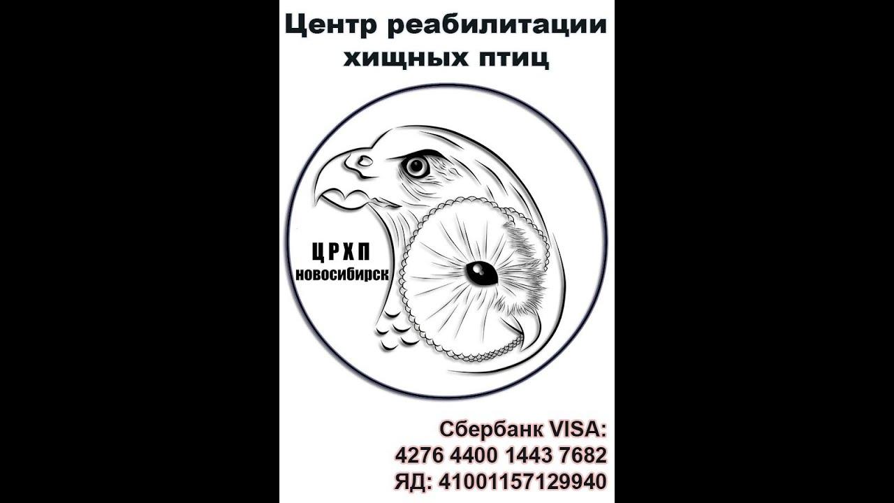 Центр реабилитации хищных птиц Новосибирск - YouTube