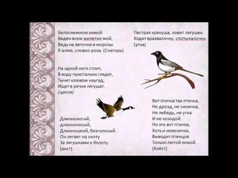 Загадки о птицах. Проект