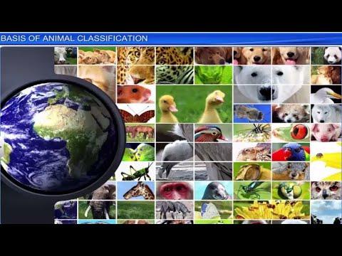 CBSE Class 11 Biology, Animal Kingdom – 1, Basis of Animal Classification