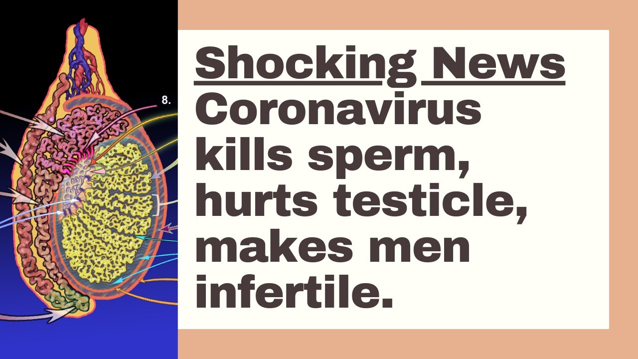 #Wuhan #coronavirus damages men's fertility, shown by China's TongJi Hospital. Human race in danger!
