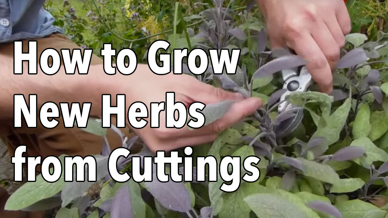 Discussion on this topic: How to Grow Cuttings from Established Plants, how-to-grow-cuttings-from-established-plants/