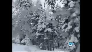 Школа горных лыж - виды поворотов