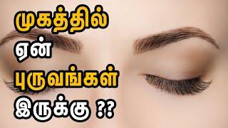 புருவங்களுக்கு இவ்வலவு வேளைகள் இருக்கா ! | ரகசிய உண்மைகள் - Unknown Facts Tamil