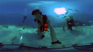 Creature Feature with Spencer Slate - Insta360 ONE X in 360bubble Underwater Housing 5K 360 video