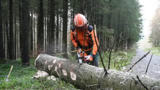 Baumfällen mit einem Holzfäller-Profi