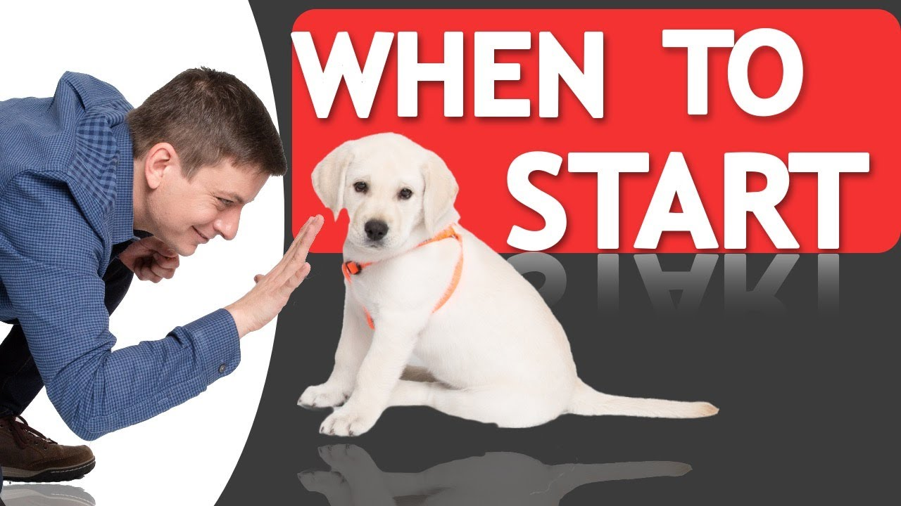 When Should You Start Training Your Dog