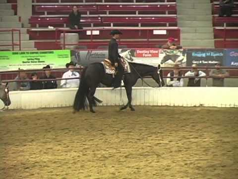 I bought a western pleasure show horse?