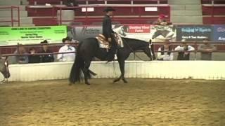Black quarter horse western pleasure horse for sale - Kim Connors  - Contact Hurricane Hill