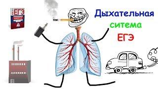 Дыхательная система человека. ЕГЭ по биологии