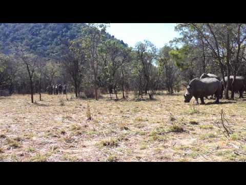 Rhinos in Matopo Hills