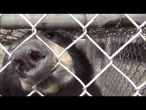 Ohio 2013 bear rescue