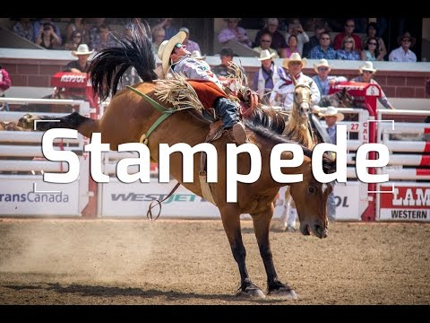 THE CALGARY STAMPEDE: RANCHES & RODEOS