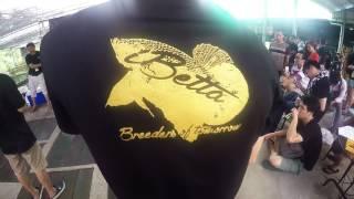 IBETTA 2016 BY KING BETTA FARM THAILAND
