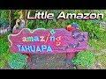 Little Amazon Thailand. TakuaPa Little Amazon Mangrove Forest.