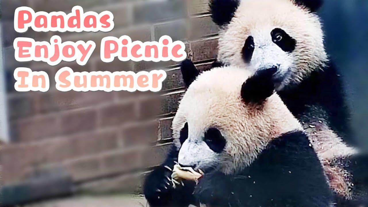 【Panda Billboard】Episode 209 Pandas Enjoy Picnic In Summer   iPanda