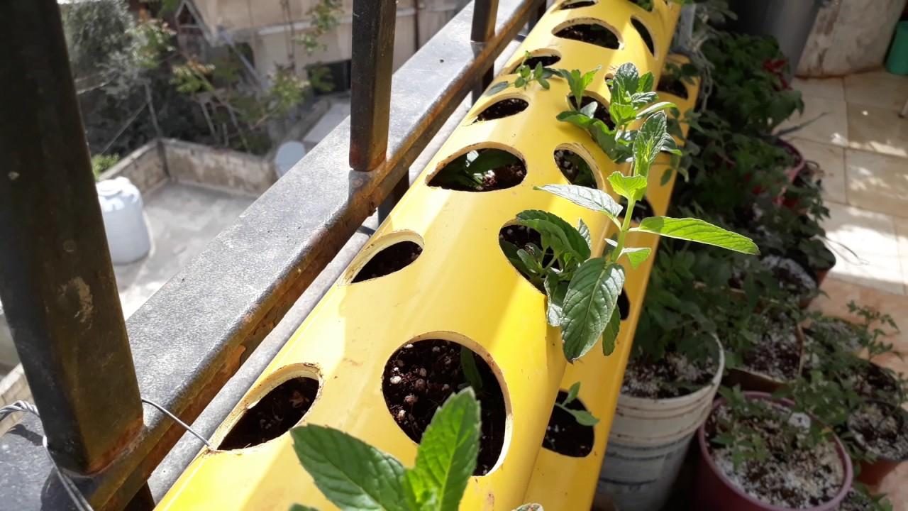 agriculture dans les cellules du tube syst me de pvc cultivez la menthe le persil les fraises. Black Bedroom Furniture Sets. Home Design Ideas