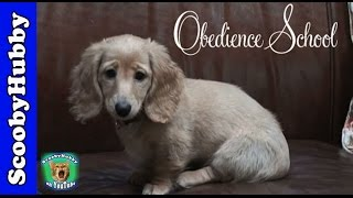 Obedience School -- Dog Days #1