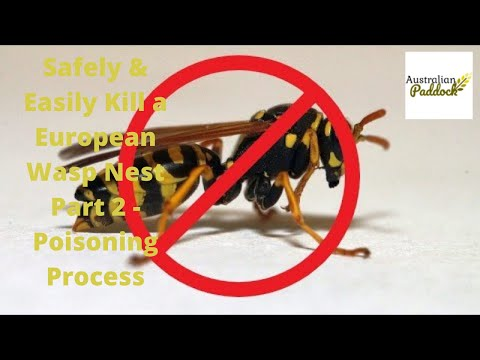 Safely & Easily Kill a European Wasp Nest Part 2 - Poisoning Process