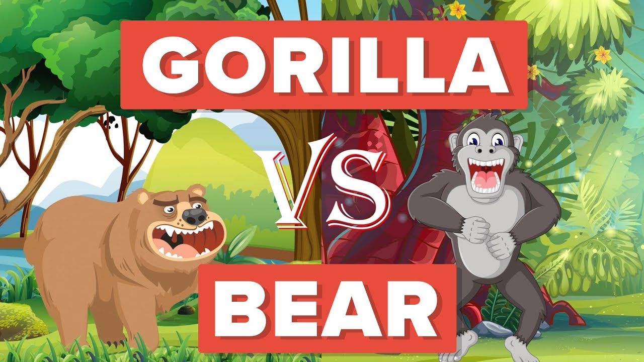 Gorilla vs Bear - Who Would Win? - Animal Comparison