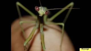 Royalty Free Sounds (Crickets)