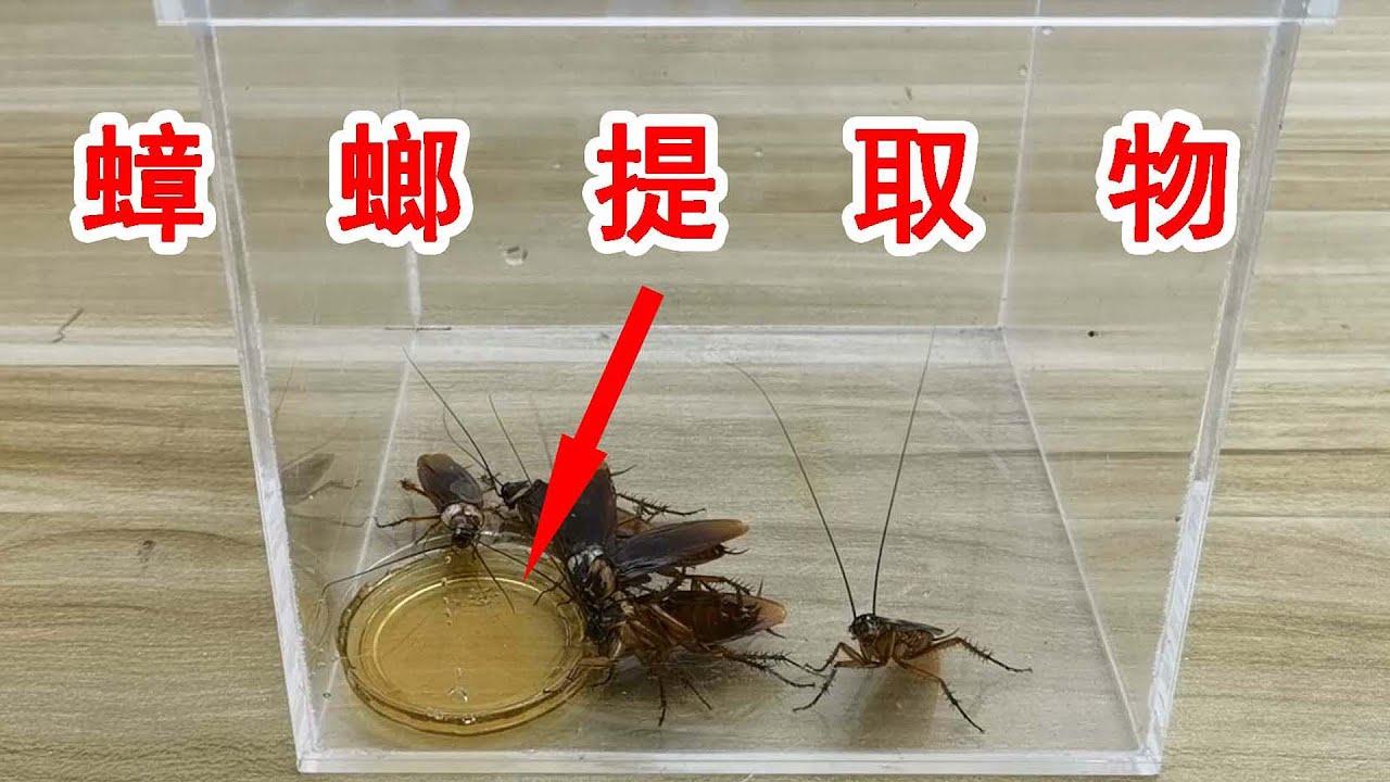 天哪!我居然吃了用蟑螂做的藥! 【歪點子實驗室】