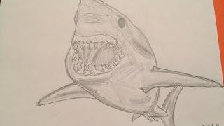 How to draw a Mako Shark