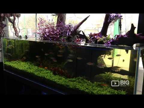 Nature Aquariums in Melbourne an Aquarium Shop for Aquarium Supplies