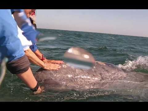 Petting Gray Whales with Footloose Forays