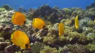 Красное Море Подводный Мир (Видео Турист)(Видео Турист Красное Море Подводный Мир (Видео Турист), 2015-04-10T19:31:19.000Z)