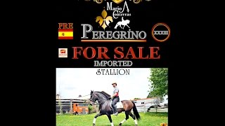 Baixar - For Sale Pergrino Xxxiii Pre En Venta Imported From Spain Grátis