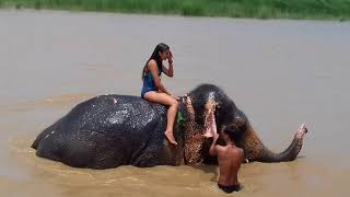 Download Video Elephant bathing Chitwan Nepal/ Krishna Rai MP3 3GP MP4